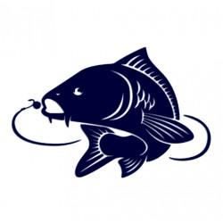 Samolepka na auto- kapr s háčkem- rybaření