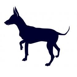 Krysařík- Samolepka na auto - pes v autě