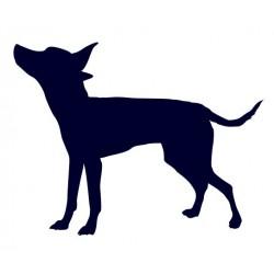 Pražský krysařík- Samolepka na auto- pes v autě