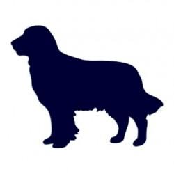 Nálepka na auto-retrívr- pes v autě